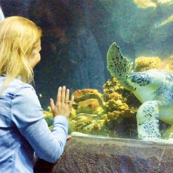 Sea Life Oberhausen Schildkröte