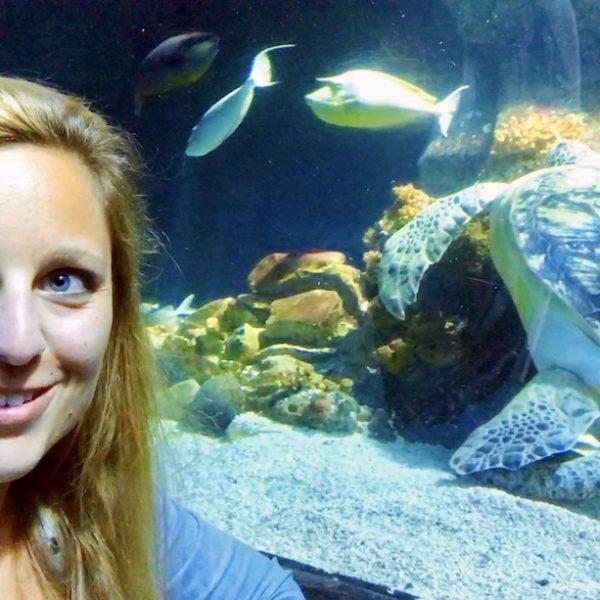 Sea Life Oberhausen Schildkröte Fische