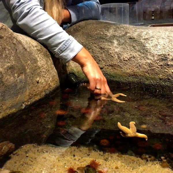 Seestern streicheln Oberhausen Sea Life