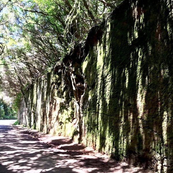 Sehenswertes auf Teneriffa Anaga Gebirge grüne Wand