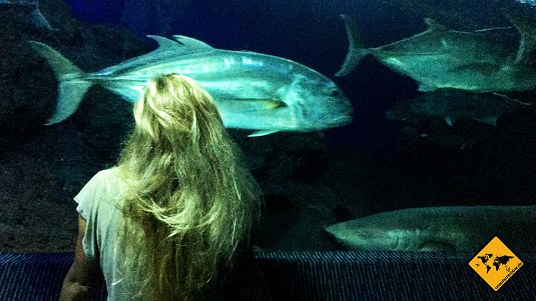 Sehenswürdigkeiten Pattaya Underwater World