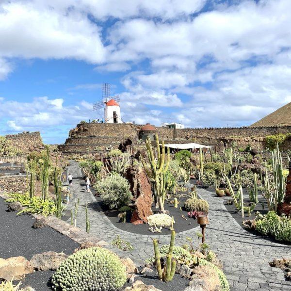 Sehenswürdigkeiten auf Lanzarote: Jardín de Cactus