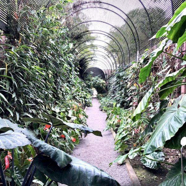 Sehenswürdigkeiten auf Teneriffa botanischer Garten Puerto de la Cruz