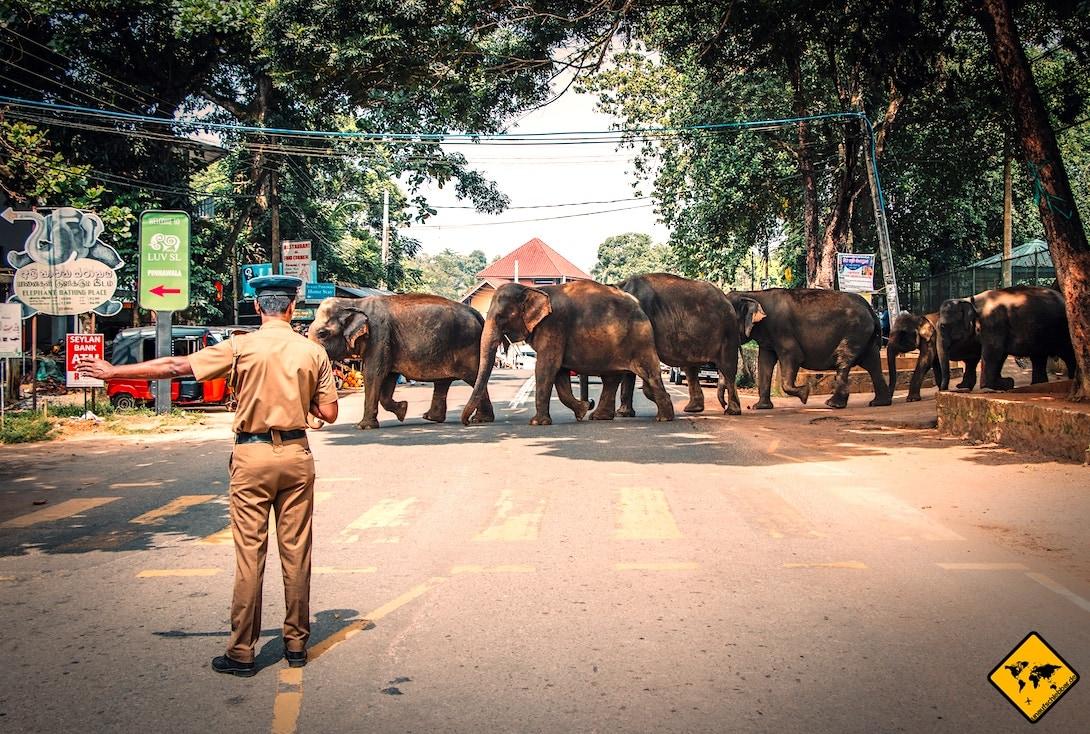 Sicherheit in Sri Lanka Elefantenherde