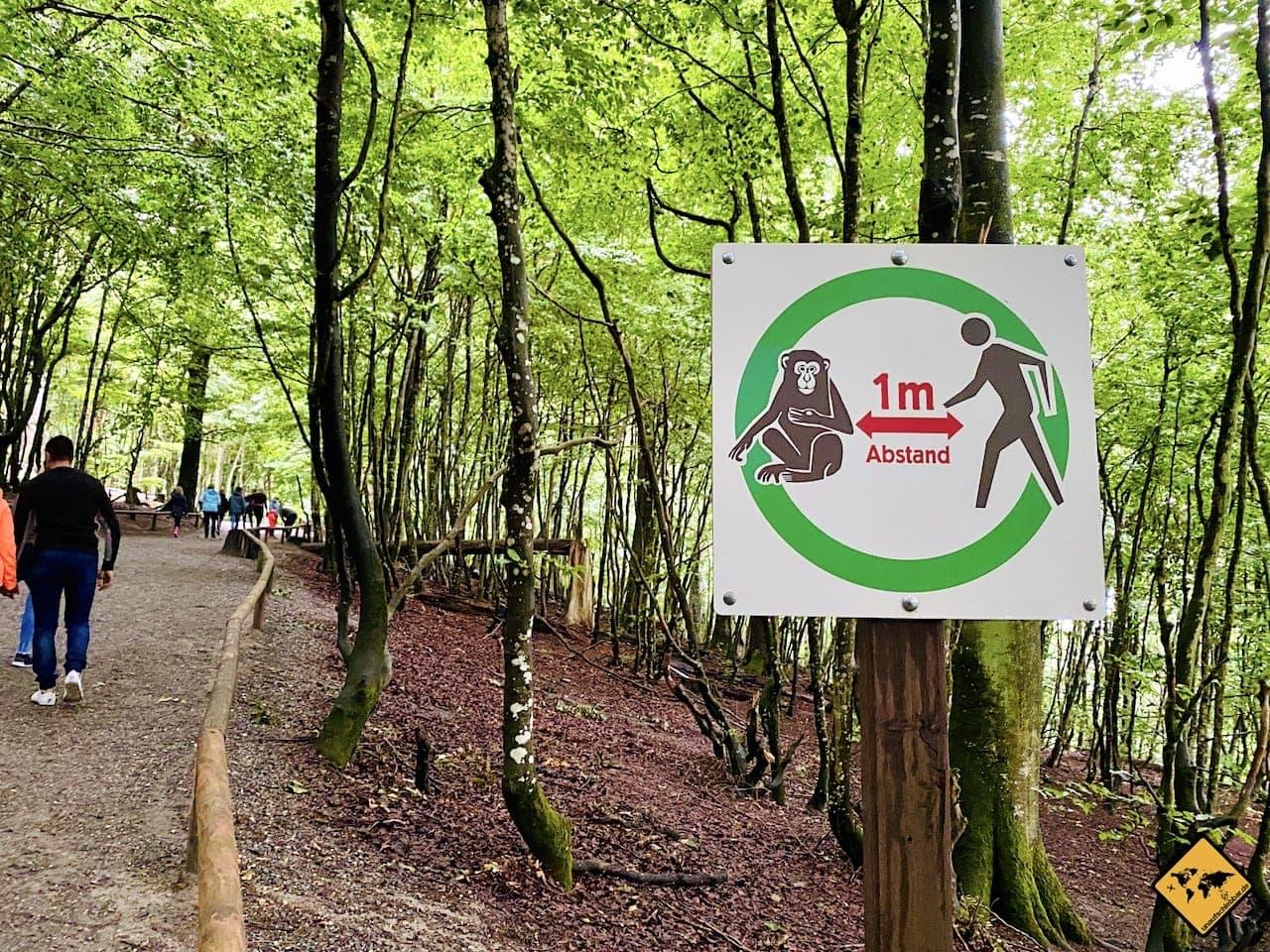 Sicherheitsabstand 1 Meter Affe zu Mensch