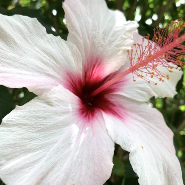 Sitio Litre Garten Puerto Cruz Blume
