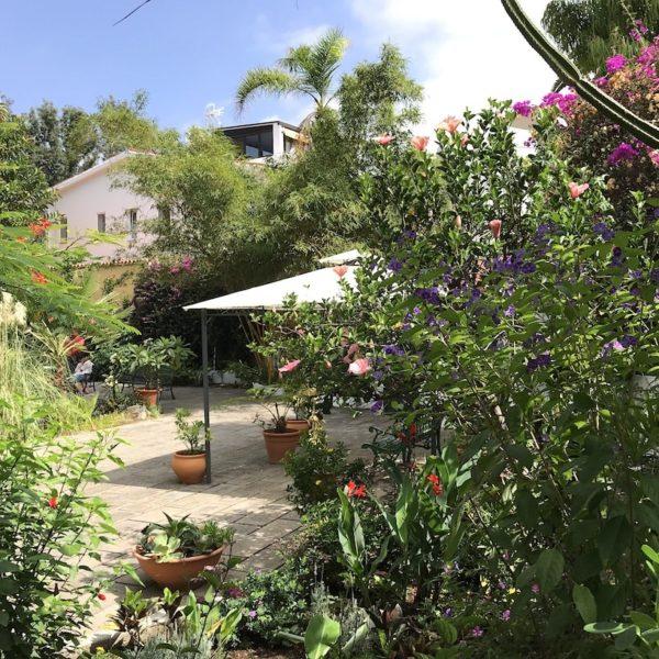Sitio Litre Garten Puerto Cruz Pflanzen