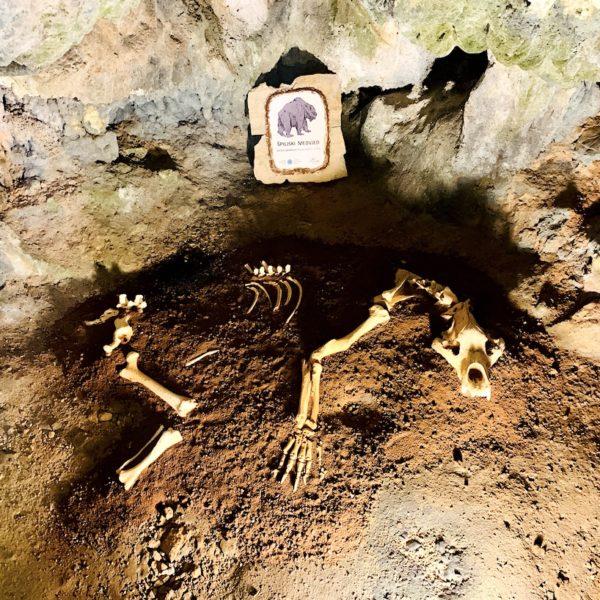 Skelett Nachbildung Höhlen-Bär Kroatien Tropfsteinhöhle