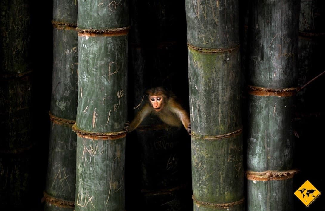 Sri Lanka Urlaub gefährlich Affe Tollwut