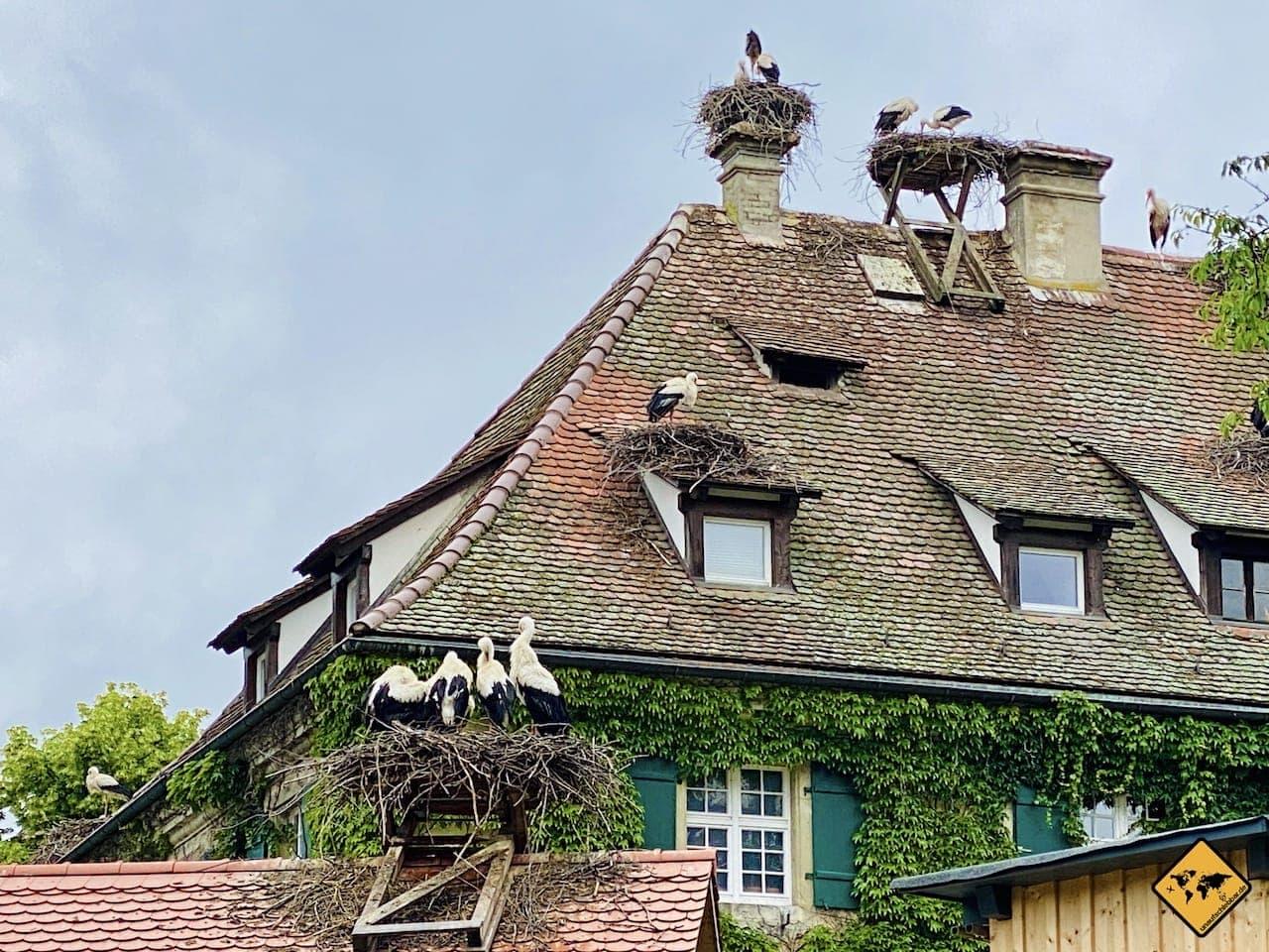 Störche Nester Dach Salem