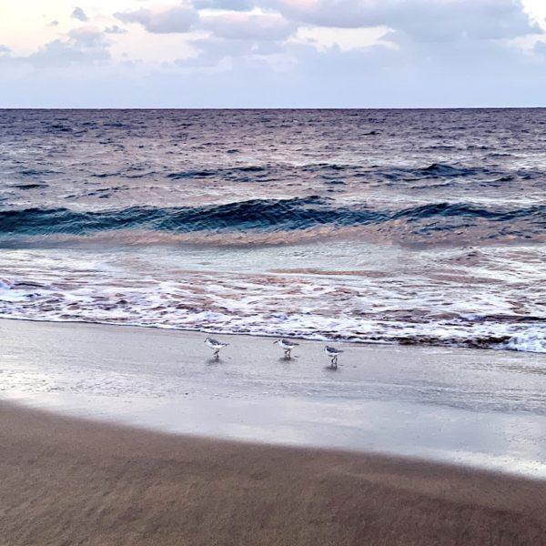 Strand Möven Puerto del Carmen Lanzarote