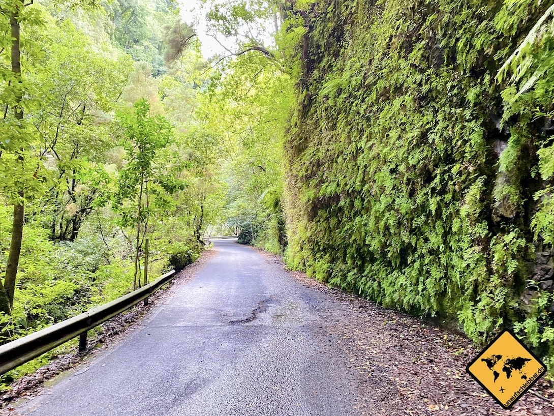 Straße LP-105 La Palma
