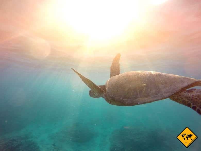Südthailand Schildkröte