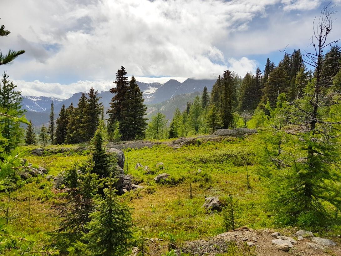 Sunshine Meadows Trail Rocky Mountains Kanada
