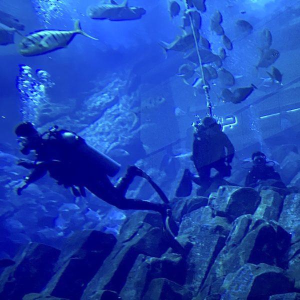 Taucher Dubai Aquarium