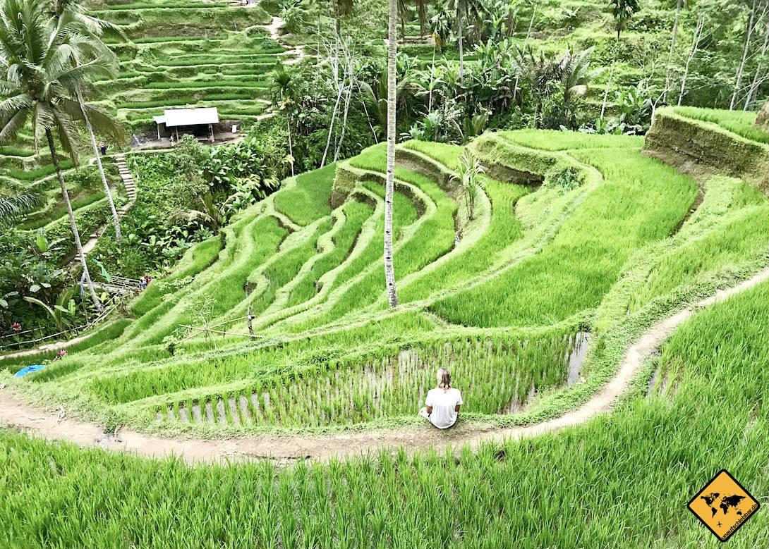 Tegalalang Reisterrassen auf Bali