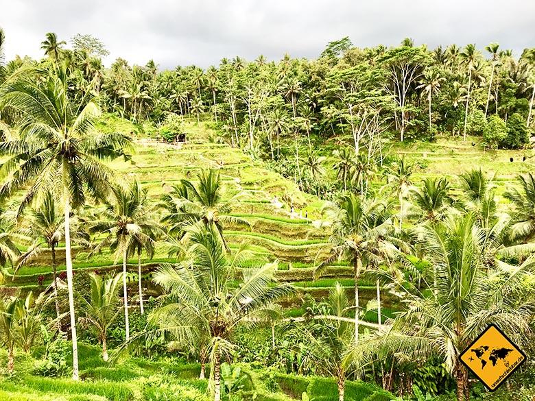 Tegalalang Rice Terrace Aussicht