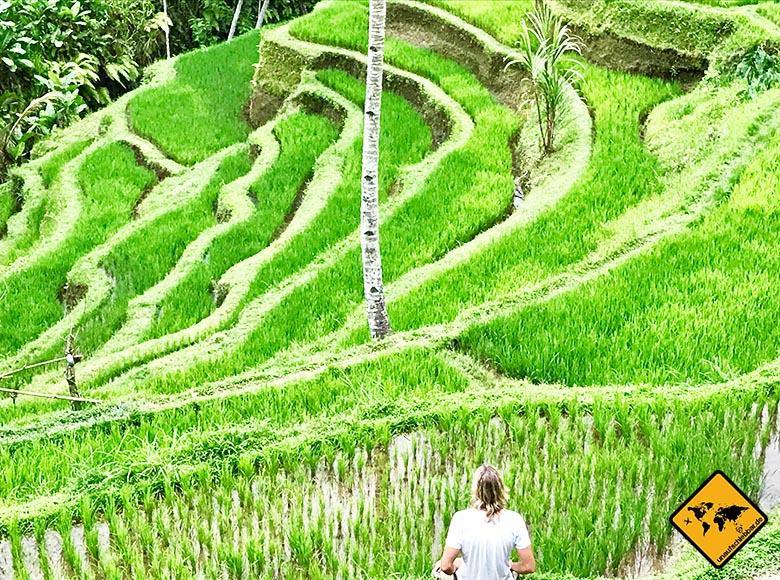 Tegalalang Rice Terrace Ruhe