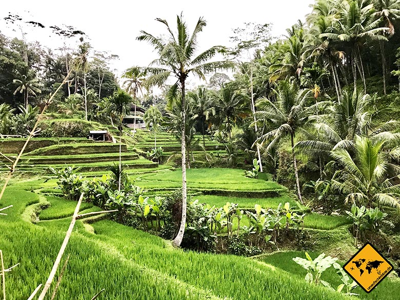 Tegalalang Rice Terrace hinterer Bereich