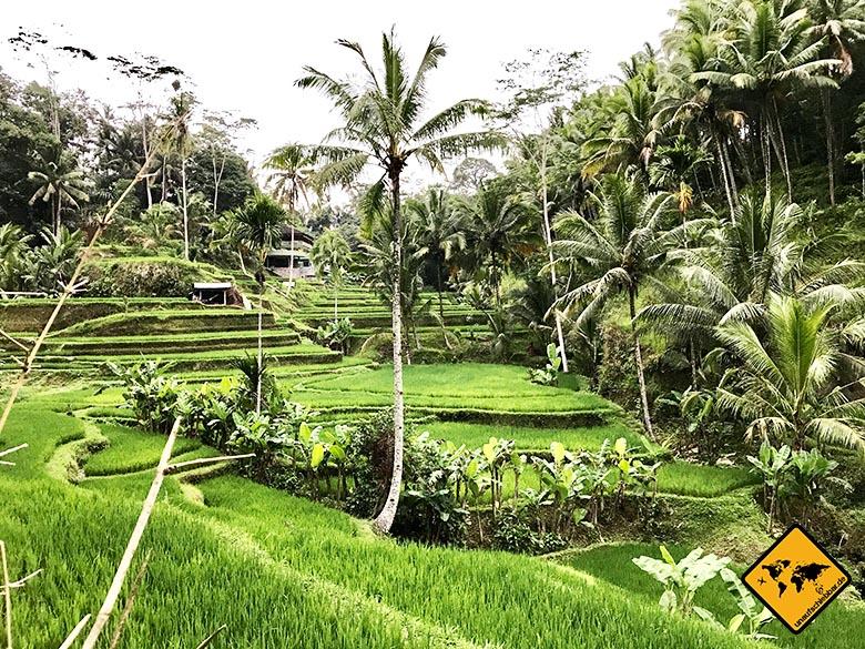Tegalalang Rice Terrace hinterer Bereich