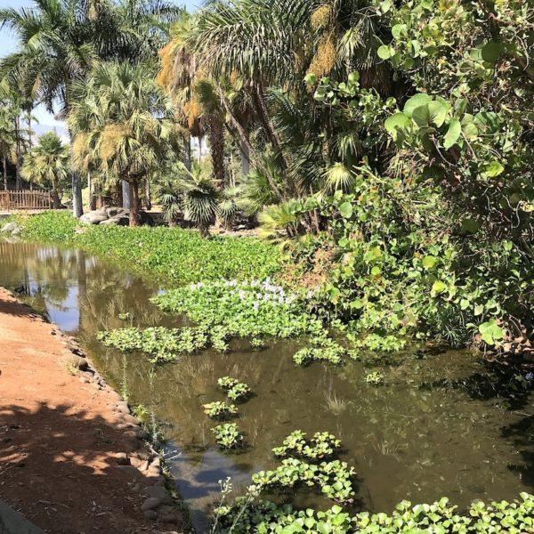 Teich Palmengarten Santa Cruz Teneriffa
