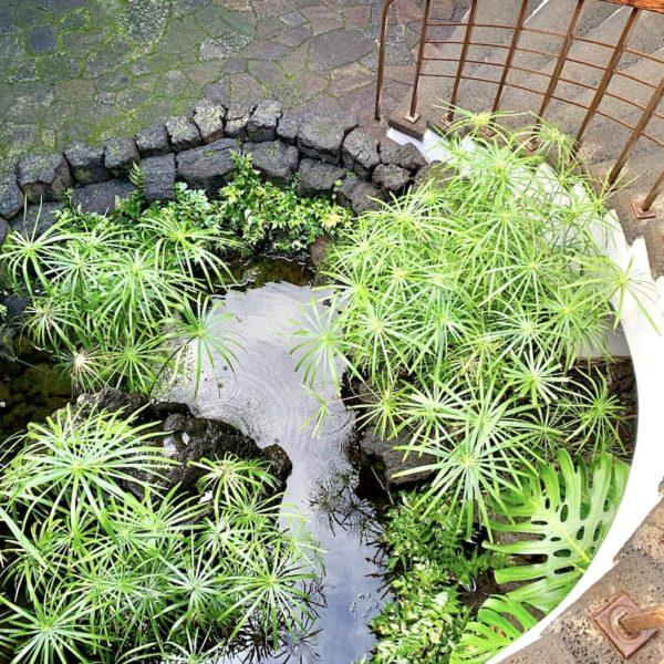 Teich Pflanzen Treppe Monumento al Campesino Lanzarote