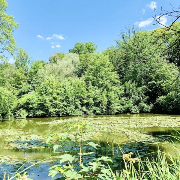 Teich am Schloss Lüntenbeck
