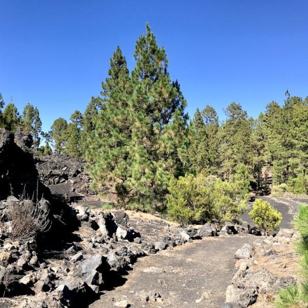 Teide Nationalpark Chinyero Wanderweg