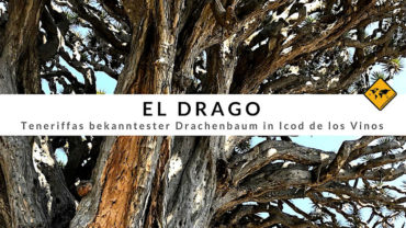 El Drago (Drachenbaum Teneriffa) – Top 3 Highlights im Drago Park