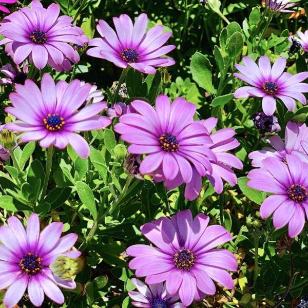 Teneriffa Frühling Blumen