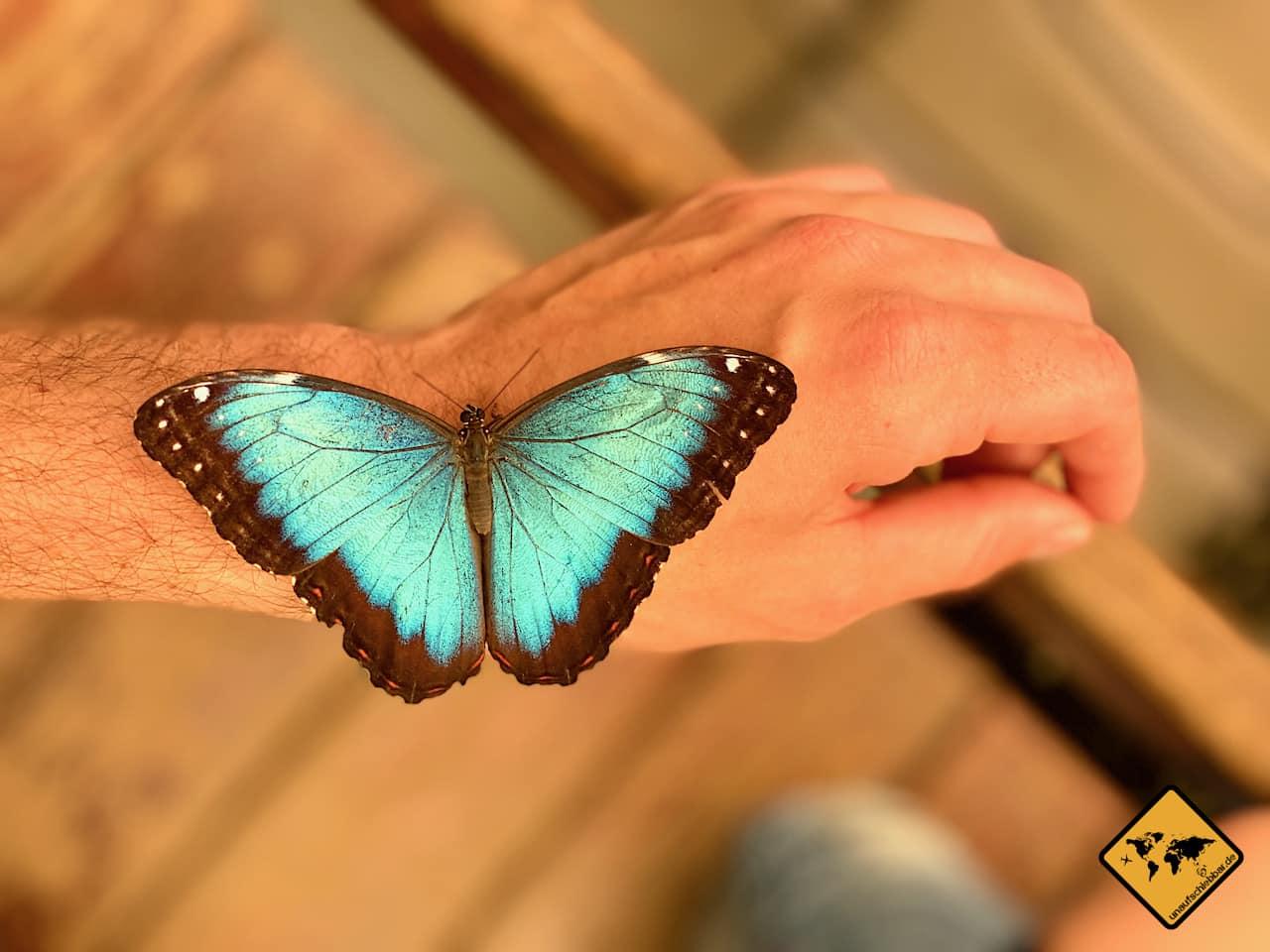 Teneriffa Highlights Schmetterlingshaus
