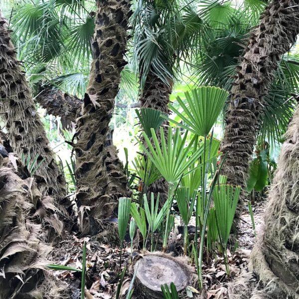 Der botanische Garten in Puerto de la Cruz beherbergt viele außergewöhnliche Pflanzen