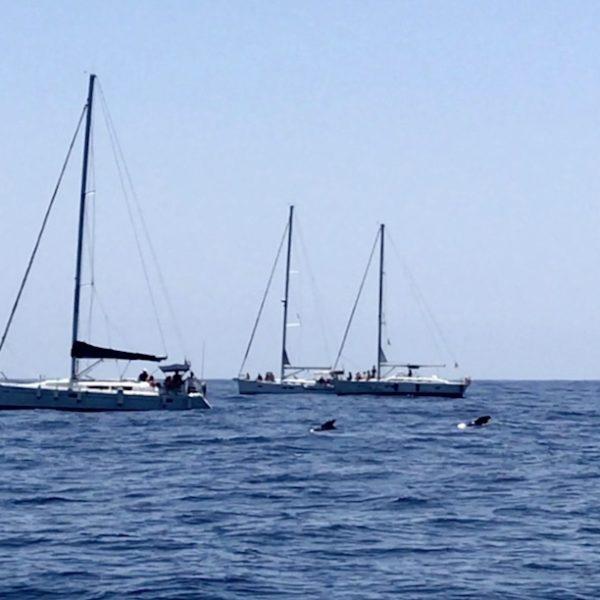 Blick auf zwei Teneriffa Wale im Atlantischen Ozean