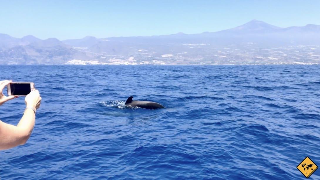 Da du die Teneriffa Wale mit Sicherheit auch fotografieren möchtest, solltest du an deine Kamera bzw. dein Smartphone denken