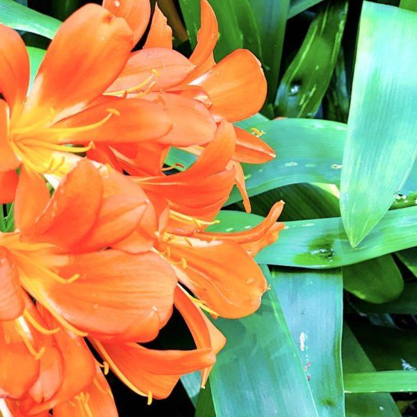 Teneriffa botanischer Garten La Orotava Blumen