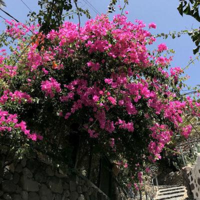 Farbenfrohe Blumen sind eher eine Seltenheit im überwiegend kargen Teno Gebirge