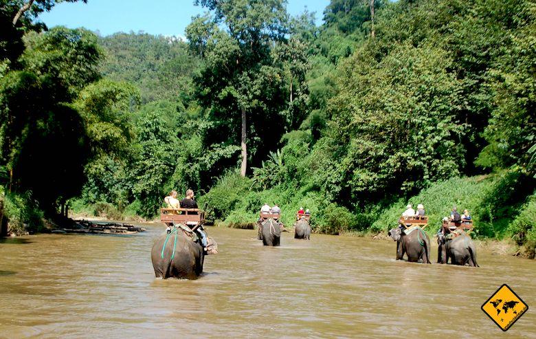 Thailand oder Bali Elefanten reiten