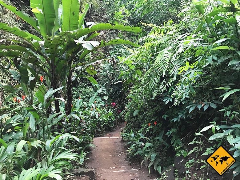Tibumana Wasserfall Dschungel-Landschaft