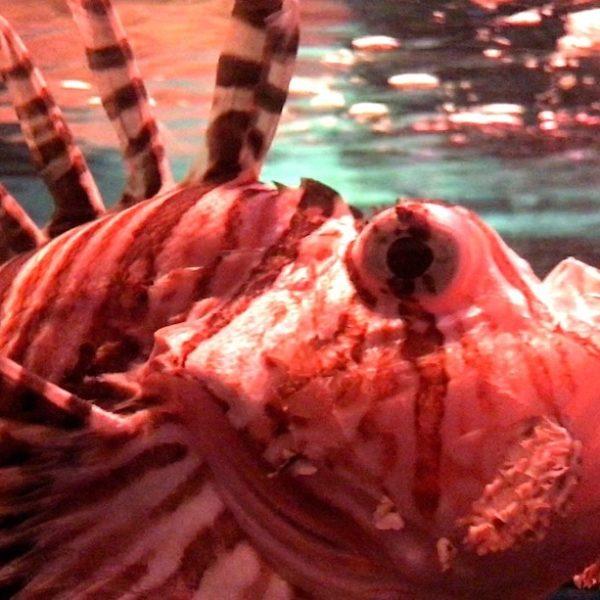 Tiefseefisch Sea Life