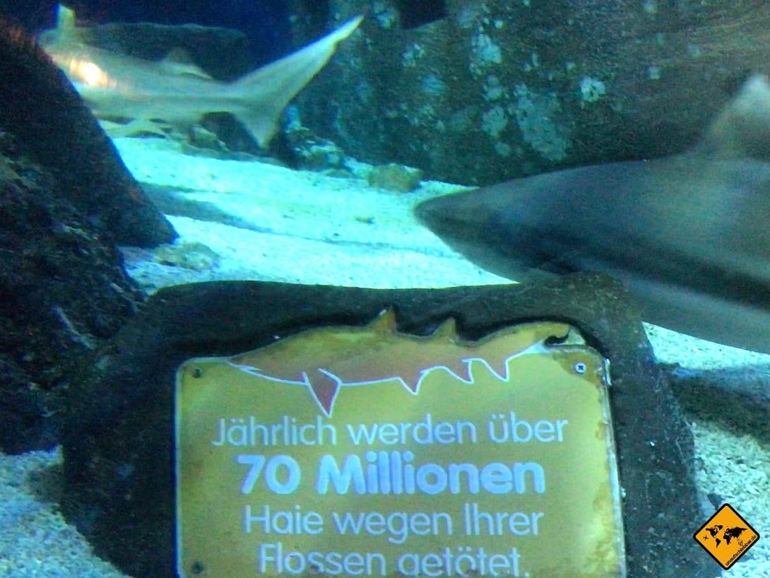 Tierschutz Information Unterwasserwelt Oberhausen