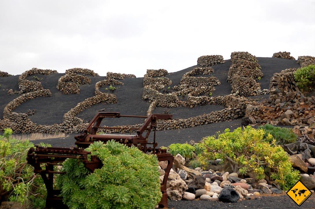 Hier siehst du eines der Weinanbau-Gebiete im Timanfaya Naitonalpark Lanzarote