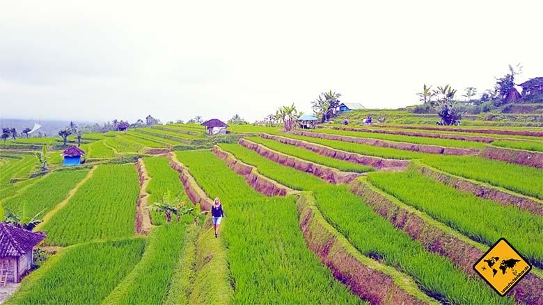Tipps für Bali Jatiluwih Reisfeld Trekking