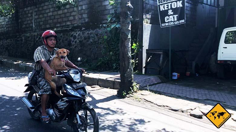 Tipps für Bali Roller mieten