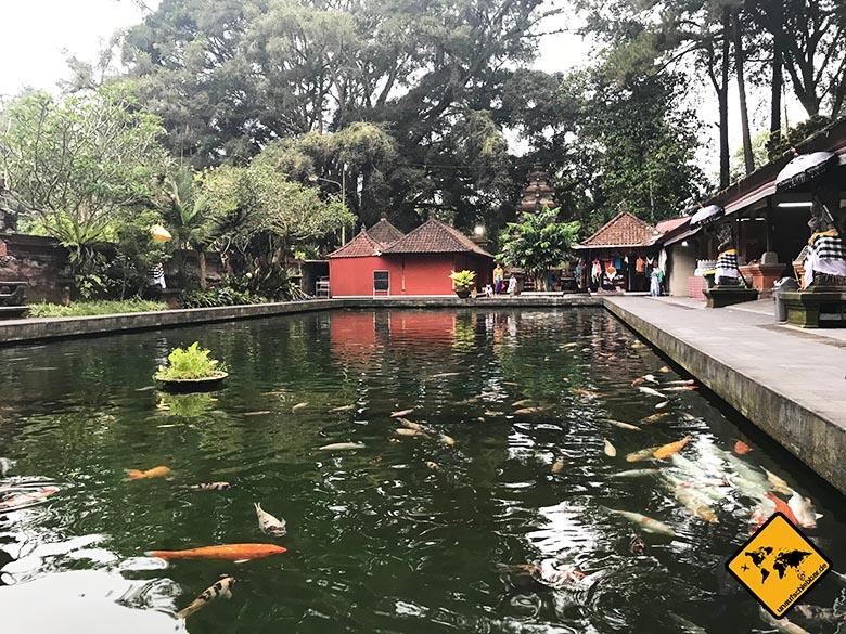 Tirta Empul Bali Koi Karpfen Becken