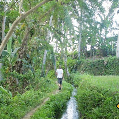 Tropischer Wanderweg Ubud