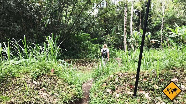 Tukad Cepung Wasserfall Weg Dschungel