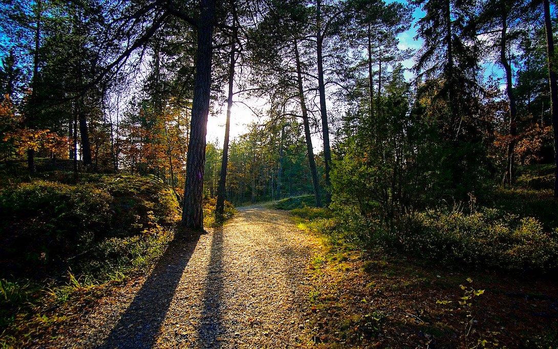 Tyresta Nationalpark Schweden