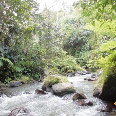 Ubud River