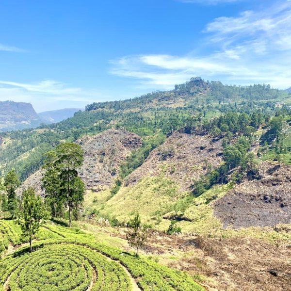 Umgebung Teeplantage St. Clairs Falls Sri Lanka