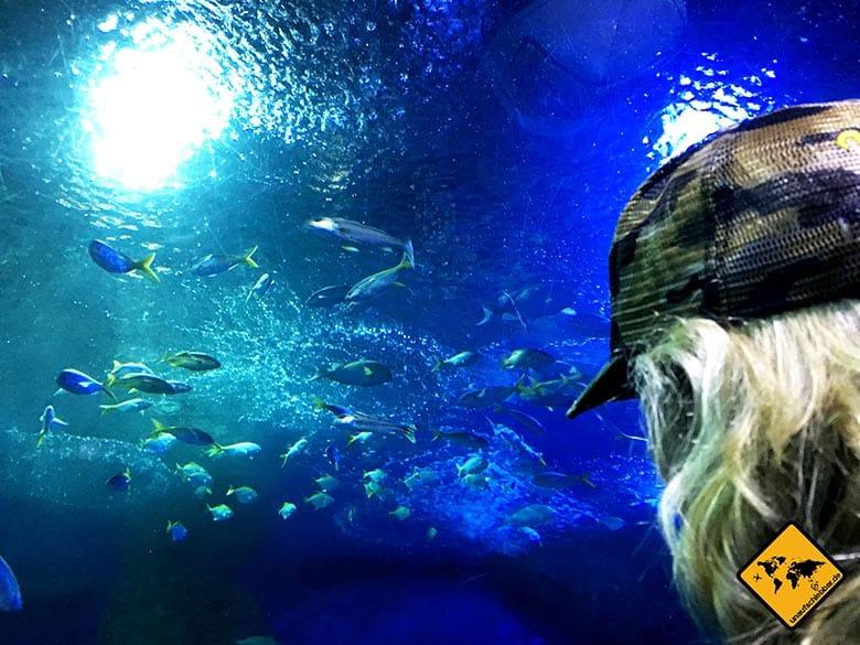 Underwater World Pattaya Fische Tunnel
